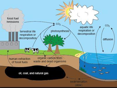 Carbon cycle class 9 natural resources carbon cycle ccuart Images