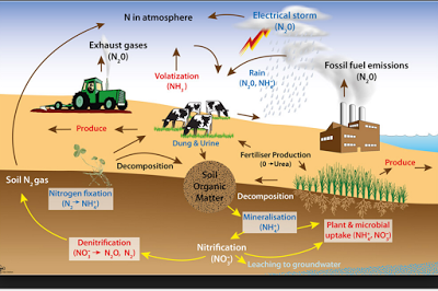 nitrogen cycle class 9 natural resources