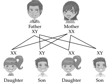 Chapter 9 Heredity and Evolution (6)