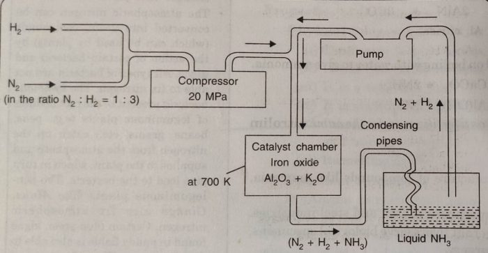 Haber's process for the manufacture of ammonia