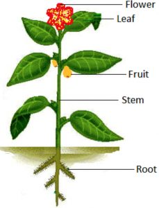 Parts of plant
