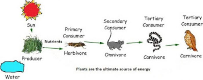 Plants are the ultimate source of food