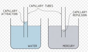 Water rises whereas mercury level falls in capillary tube