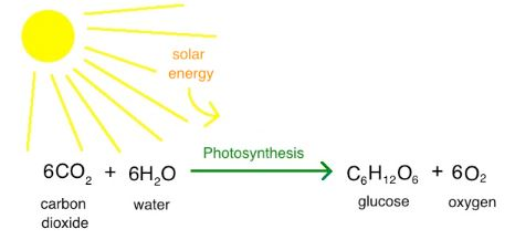 photosynthesis class 10