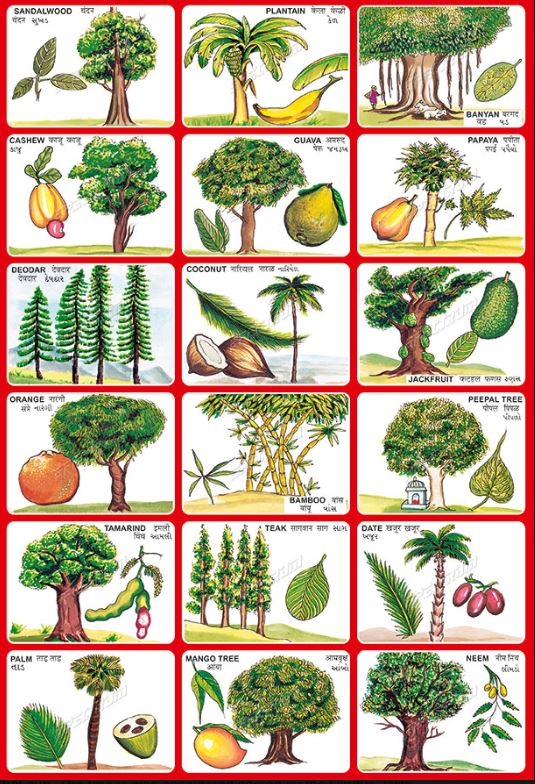 tree names in hindi